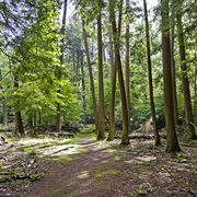 Wander through a 200 year old Hemlock forest.