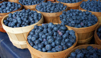 Harrietta Blueberry Festival