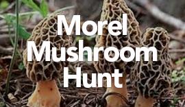 Guided Morel Mushroom Hunt and Dinner