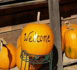 Visit a local Pumpkin Patch!