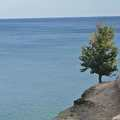 A lone tree on top of the Pictured Rocks.