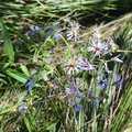 Wildflowers along Beaver Creek Trail.
