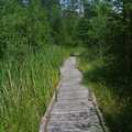 A portion of trail at Teichner Preserve is a boardwalk.