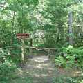 Trail junction for Birch Grove Trail.