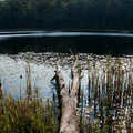 Lost Lake along Pine Valleys Pathway.