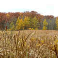 Fall colors along the Goose Meadow Trail.