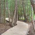 Boardwalk through a cedar swamp at DeYoung Natural Area