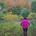 A hiker admiring the fall colors at Krumwiede Forest Reserve