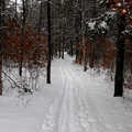 Buttles Road Pathway was originally a Nordic ski trail.