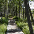 Boardwalk along Deer Flats Nature Trail.