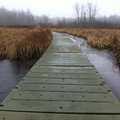 The floating trail at Bishop's Bog Preserve.