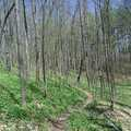 Pete's Woods is a walk along a forested ridge.