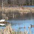 Waterfowl along the Marsh Trail.