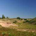 The dune environment at Zetterberg Preserve