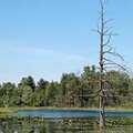 Richardson Lake at Rose Oaks County Park.