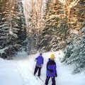 Cross-country skiers on Warner Creek Pathway.