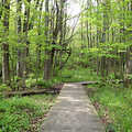 A boardwalk trail at Price Nature Center.