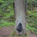 Lost Lake Trail features giant hemlocks and hardwoods.