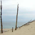 A ghost forest at Warren Dunes State Park.