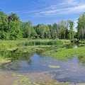 Wetlands surrounding Mud Creek impoundment.