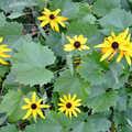 Wildflowers at Arcadia Dunes.