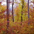 Fall at Price Nature Center.
