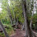 Oden Island foot trail.