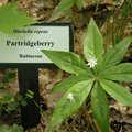 Wildflower marker at Loda Lake Wildflower Sanctuary.