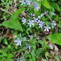More wildflowers at Dowagiac Woods.