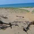 Open Dunes at Saugatuck Dunes State Park.