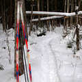 Spring Brook Pathway is most popular among skiers.