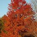 Fall colors at Yuba Creek Natural Area.