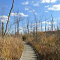 Boardwalk and wetlands along the Blue Trail.