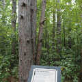 Interpretive sign along the Whispering Pines Nature Trail.