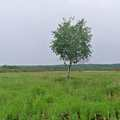 A lone tree in the middle of Arcadia Marsh.