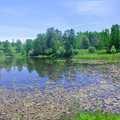 A wetalnd pond at Chippewa Run.