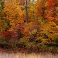 Fall colors at Upper Macatawa Natural Area
