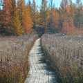 A boardwalk at Grass River Natural Area.