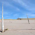A ghost forest seen along the Dunes Trail.