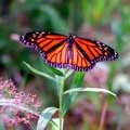 Lyon Oaks County Park includes a butterfly garden.