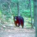 Bear sightings on the Cross Trail.