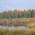 Fall colors at Wakeley Lake.