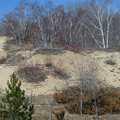 Open dunes at Houdek Dunes Natural Area