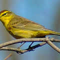 Lyon Oaks County Park offers birding for warblers.