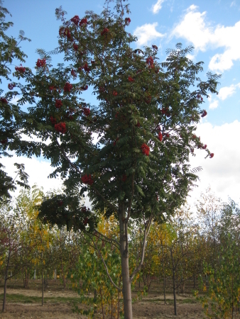 Boyne City Mi >> Nursery Stock - Robinson's Landscaping and Nursery
