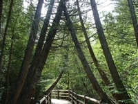 Lower Falls Boardwalk - M. Robinson