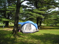 beautiful grassy tent sites