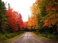 Forest Gardens Getaway driveway