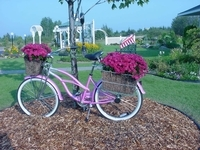 "Our bike ""planter"" in the garden."