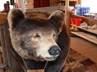 come and visit WOW bear in our new gift shop!